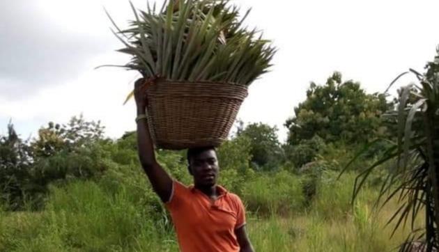 Togo: à la découverte d'un jeune agriculteur