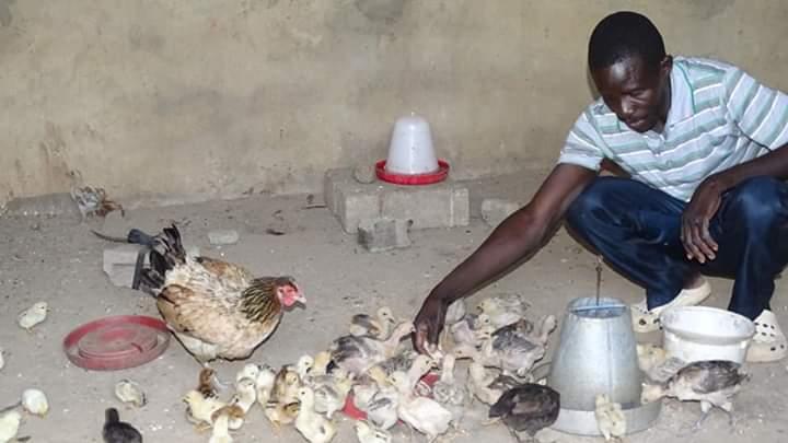 Interview: «J'ai choisi de faire l'élevage des volailles parce que cela semble facile» ,  Komlan Peke